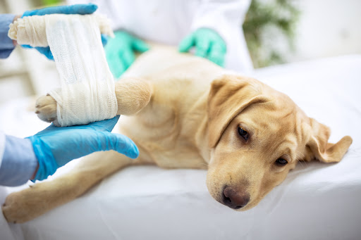 Canine Liver Disease