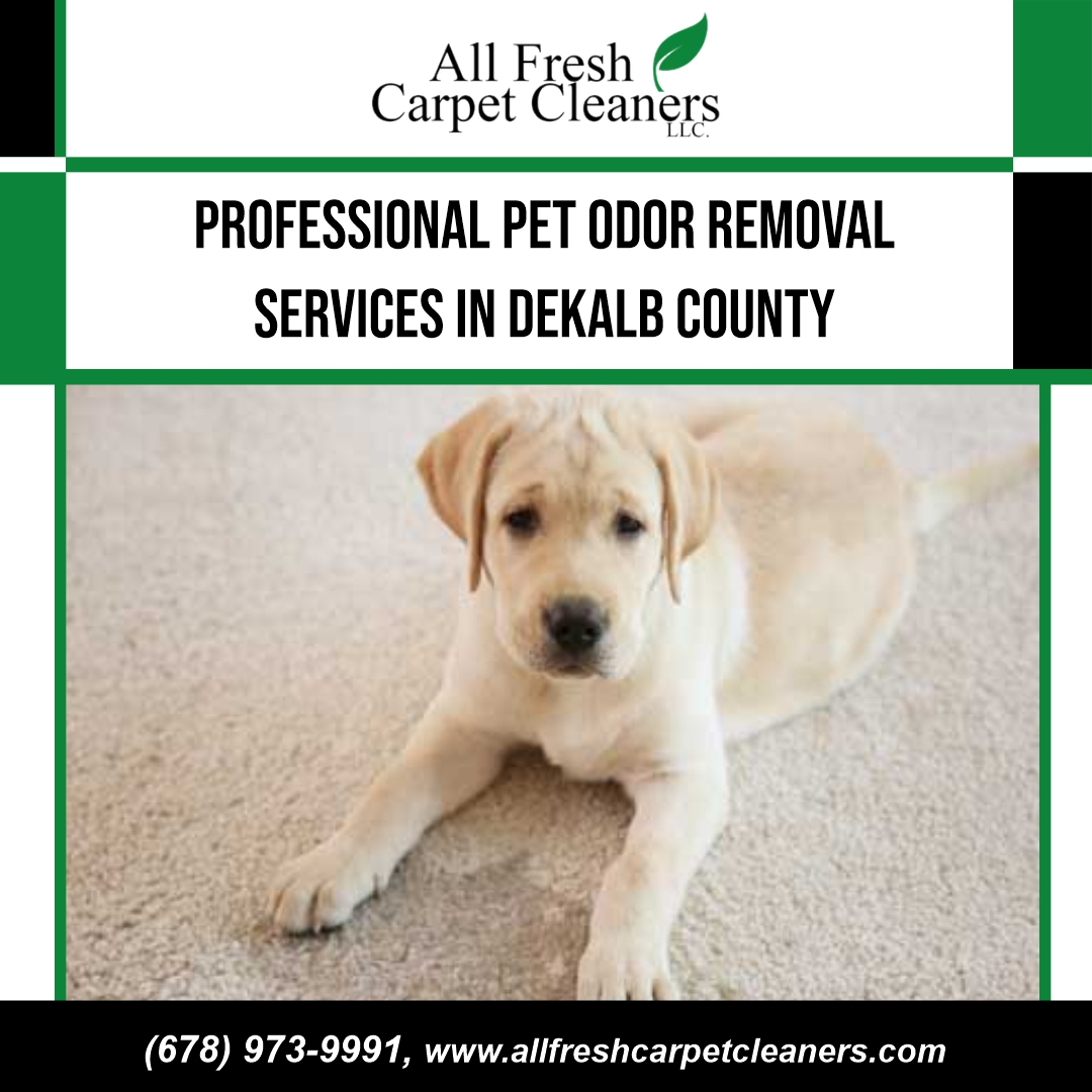 PROFESSIONAL PET ODOR REMOVAL SERVICES IN DEKALB COUNTRY