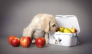 Dog Joint Pain Supplements