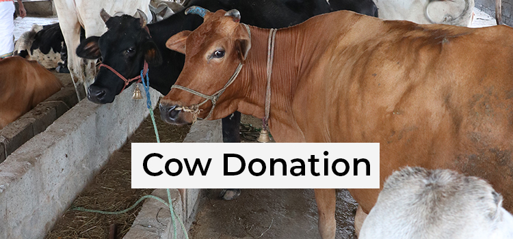 cow donation